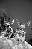 Sleigh with reindeer. Santa Claus's sleigh with reindeer in snow Royalty Free Stock Photo