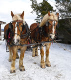 Sleigh Ride Royalty Free Stock Photos