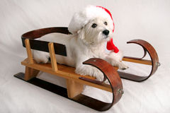 Sleigh ride Stock Photo