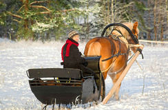 Sleigh ride with horse drawn sleigh. Woman driving horse-drawn sleigh in winter on snowy field Stock Photo