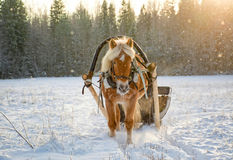 Sleigh ride with horse in winter Stock Photo
