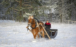 Sleigh ride with horse in winter Stock Images