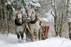 Sleigh ride through snowy forest Stock Image