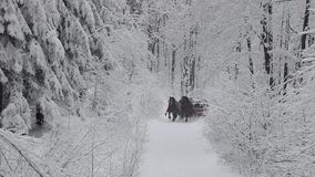 Sleigh ride stock footage