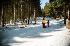 Sleighing die rodelnde Steigung an einem sonnigen Wintertag Lizenzfreies Stockbild