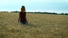 A slender woman walks on a wheat field and smiles on a Sunny summer day. A slender sweet woman walks on a wheat field and smiles on a Sunny summer day stock video