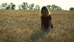 A slender woman walks on a wheat field, smiling and holding chamomile flowers in her hands on a Sunny summer day. A slender sweet woman walks on a wheat field stock footage