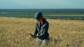 A slender woman walks on a wheat field and takes pictures of spikelets on her phone on a Sunny summer day. A slender sweet woman walks on a wheat field and stock video