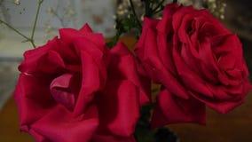 Slepen roze rozen stock footage
