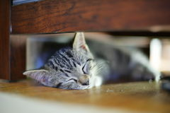 Sleppy小猫 免版税库存照片