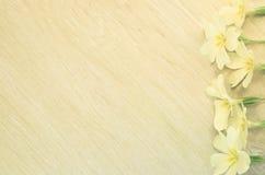 sleutelbloembloesems op een lichte pastelkleuroppervlakte Stock Afbeelding