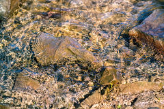 Slh glare on the water. Sun glare on the waves and rocks covered with seaweed at the bottom Royalty Free Stock Images