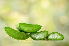 Slice Aloe Vera, a very useful herbal medicine for skin care and Royalty Free Stock Images
