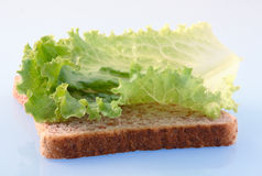 Slice of bread. With lettuce stock images