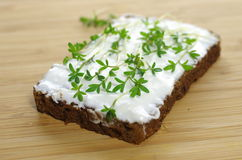 Slice of bread with cottage cheese Royalty Free Stock Image