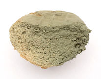 Slice of bread covered with mold royalty free stock image