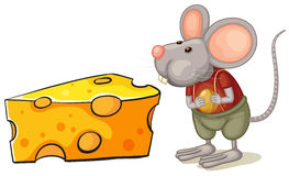 A slice of cheese beside the mouse Royalty Free Stock Photography