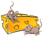 Slice of cheese with rats Stock Photos