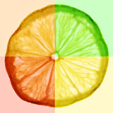 Slice of citrus fruit Royalty Free Stock Photo