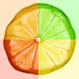 Slice of citrus fruit. Slice of colorful citrus fruit Royalty Free Stock Photo