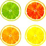 Slice of citrus fruits drawing by watercolor Stock Image