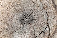 Slice from a fir tree of old wood texture. Royalty Free Stock Image