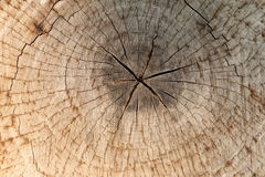 Slice from a fir tree of old wood texture. Royalty Free Stock Photos