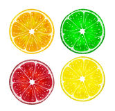 Slice of fresh citrus fruits isolated on white background. Lemon, lime,grapefruit and orange. Vector Illustration Royalty Free Stock Photos