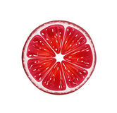 Slice of fresh citrus grapefruit isolated on white background. Vector Illustration Royalty Free Stock Image