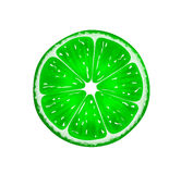 Slice of fresh citrus lime isolated on white background. Vector Illustration Royalty Free Stock Photography