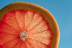 A slice of grapefruit, citrus in the sun stock image