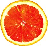 Slice of grapefruit drawing by watercolor Royalty Free Stock Photography