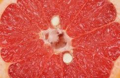 Slice of grapefruit Stock Image