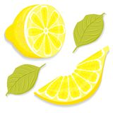 Slice and half of lemon vector Royalty Free Stock Image