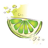 Slice of juicy green lime. Vector illustration,  on white. Royalty Free Stock Images