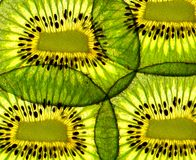 Slice of kiwi Stock Photography
