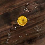 Lemon with splashes on brown background royalty free stock photos