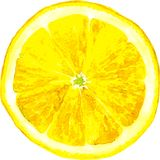 Slice of lemon drawing by watercolor Royalty Free Stock Images