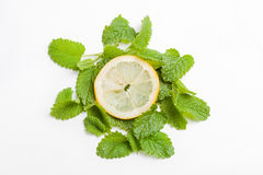 Slice of lemon on fresh lemon balm leaf, white background Royalty Free Stock Images