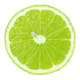 Slice of lime citrus fruit isolated on white Stock Image