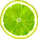 Slice of lime drawing by watercolor Stock Photography