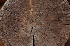 Slice of old logs Stock Photography