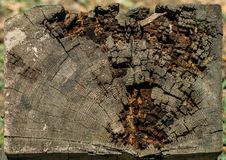 Slice of old logs Royalty Free Stock Image