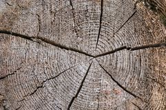 A slice of an old tree with concentric annual rings and a crack in the center. The texture of the old tree royalty free stock photography