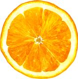 Slice of orange drawing by watercolor vector illustration