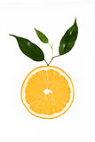 Slice of orange with green leaves Stock Images