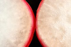 A slice of radish on a black background.  Royalty Free Stock Photos
