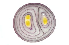 Slice of red onion Stock Image