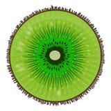 Slice of ripe kiwi. Delicious exotic fruit. Illustration of a ripe kiwi. Food Vector Image Royalty Free Stock Images