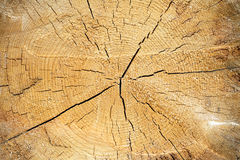 Slice of sawn wood with annual rings closeup Royalty Free Stock Photos